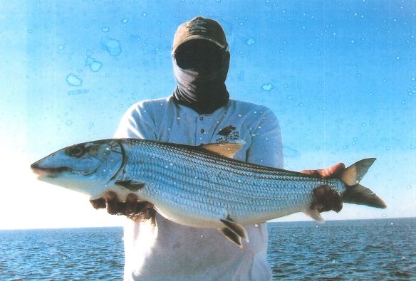 Chuck's large bonefish (00045556)