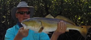 Redfish Are Gorgeous In The Everglades