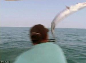Jumping Barracuda