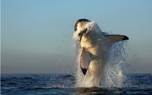 Bull Sharks Like To Eat
